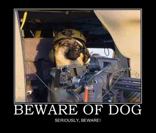 who-gave-dog-a-gun.jpg