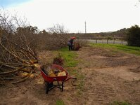 Cutting & loading the Almond trunks 023.jpg