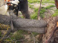 Cutting & loading the Almond trunks 025.jpg