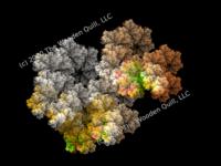 Watermark Coral Fractal  - 20200415.png