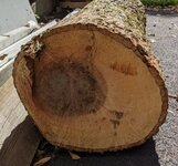 Hickory log 13inch2.jpg