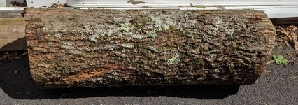 Hickory log 42inch.jpg