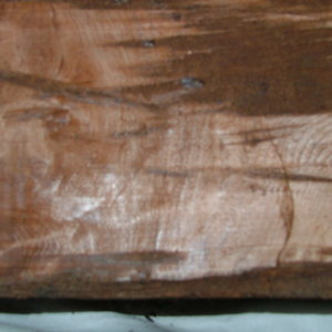redwood burl3